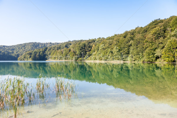 Croácia parque outono água grama floresta Foto stock © master1305