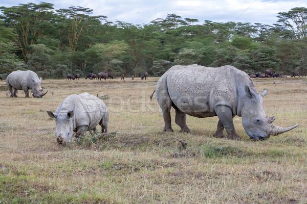 Stock fotó: Szafari · zöld · utazás · portré · Afrika · park