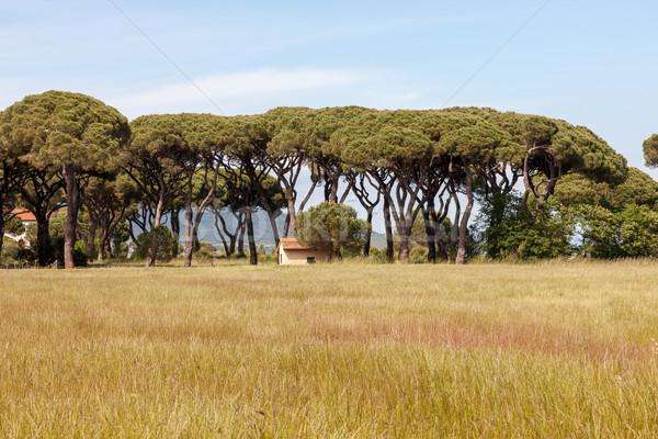 Italiaans steen pine landschap bomen weg Stockfoto © master1305
