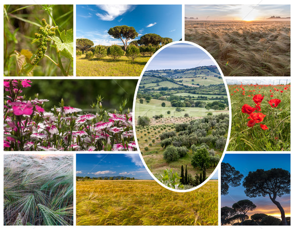 Collage of the hills in Tuscany Stock photo © master1305
