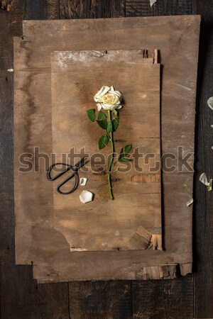 The florist desktop with working tools Stock photo © master1305