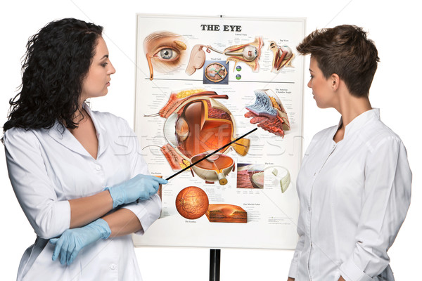 two optician or oculist women telling about structure of the eye Stock photo © master1305