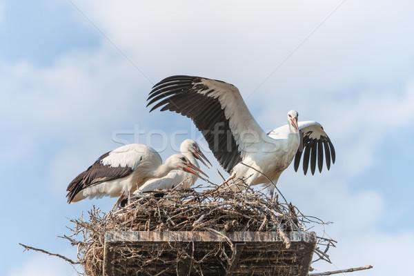 Witte nest blauwe hemel familie natuur dansen Stockfoto © master1305