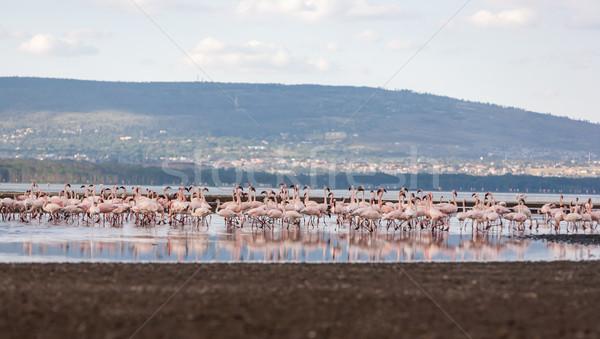 Sereg rózsaszín Kenya Afrika természet tájkép Stock fotó © master1305