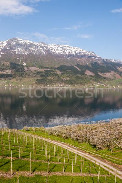 живописный ландшафты норвежский небе воды Сток-фото © master1305