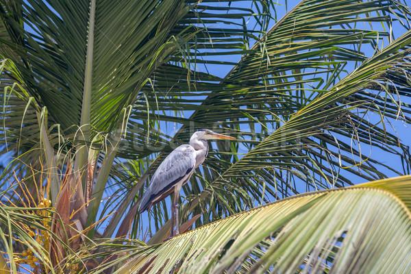 gray heron  Stock photo © master1305