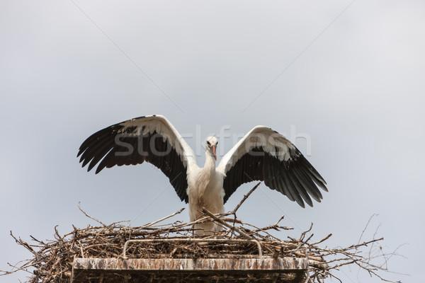 Fehér gólya fészek kék ég család természet Stock fotó © master1305