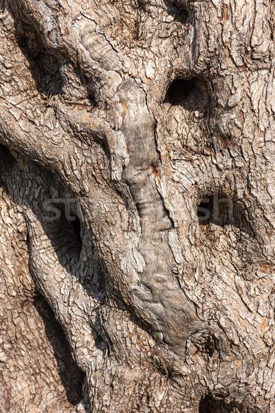 Natürlichen Baum Rinde Textur Holz Wald Stock foto © master1305