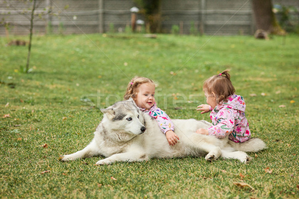 The two little baby girls playing with dog against green grass Stock photo © master1305