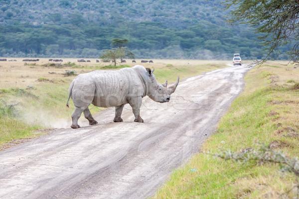 Safari - rhino Stock photo © master1305