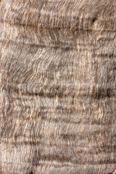Természetes fa ugatás textúra fa erdő Stock fotó © master1305