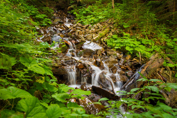 Beautiful mountain stream on  mountains Stock photo © master1305