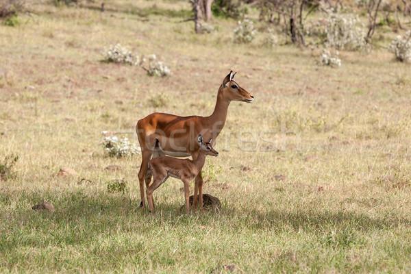 ストックフォト: カブ · 草 · 緑の草 · 自然 · 背景 · 砂漠