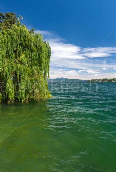 The green tree on a lake Garda with mountains as background Stock photo © master1305