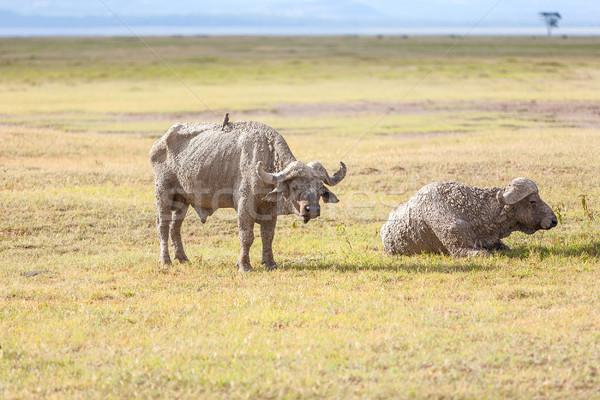 Safari dos rinoceronte sabana verde viaje Foto stock © master1305