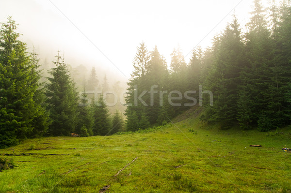 Сток-фото: красивой · соснового · деревья · гор · зеленый · Украина
