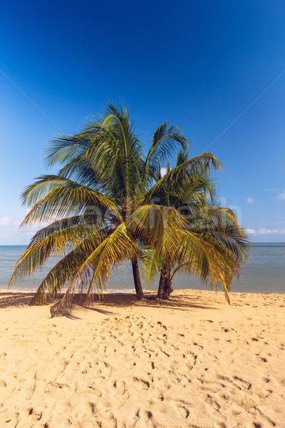 Beach on tropical island. Clear blue water, sand, palms.  Stock photo © master1305