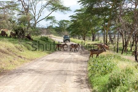 道路 サファリ アフリカ 自然 背景 砂漠 ストックフォト © master1305