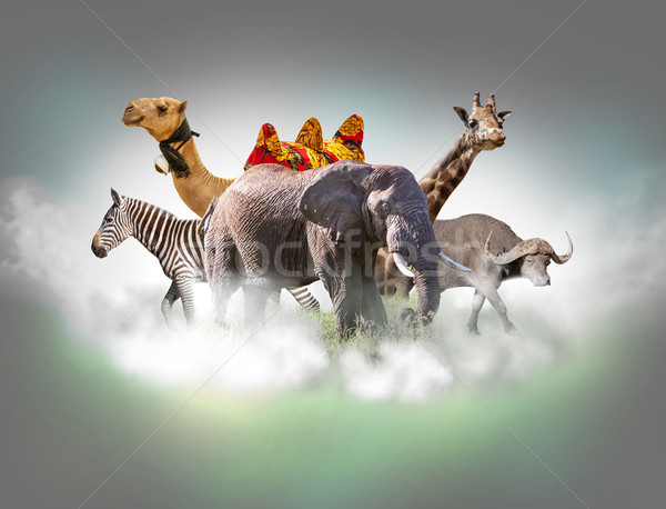 Wild animals group - giraffe, elephant, zebra above white clouds in gray sky Stock photo © master1305