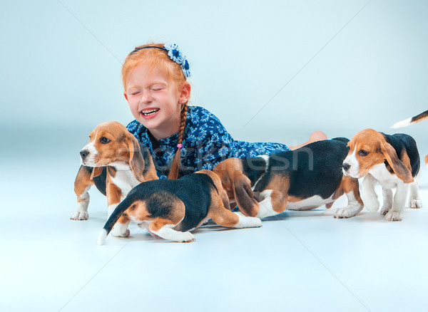 The happy girl and beagle puppies on gray background Stock photo © master1305
