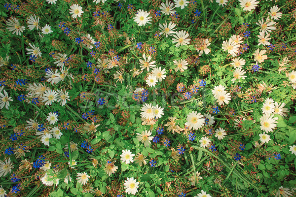Veld tuinen bloementuin bloem landschap tuin Stockfoto © master1305