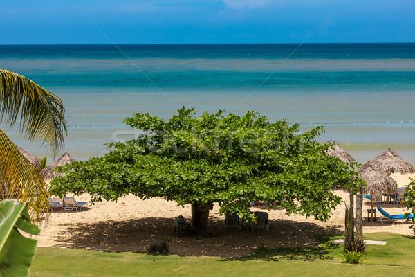 tropical garden and  the ocean beach Stock photo © master1305