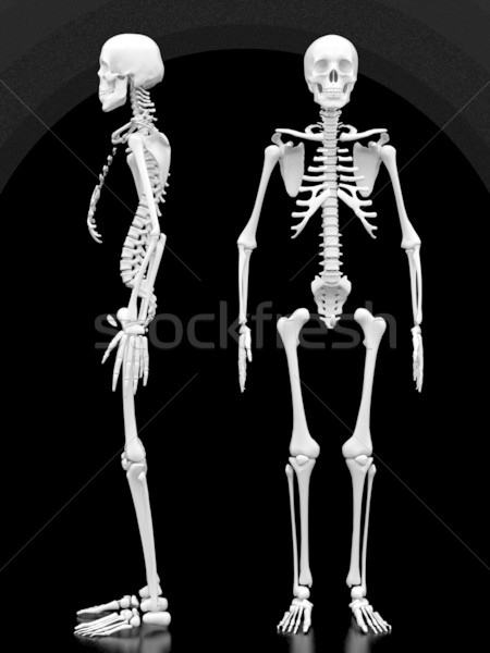 human skeleton Stock photo © mastergarry