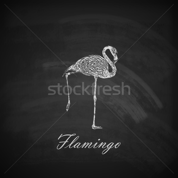 vector illustration of a chalk flamingo on the blackboard texture Stock photo © maximmmmum