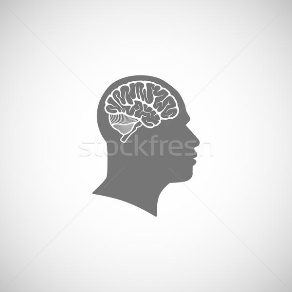 Menselijke hoofd hersenen man lichaam onderwijs Stockfoto © maximmmmum