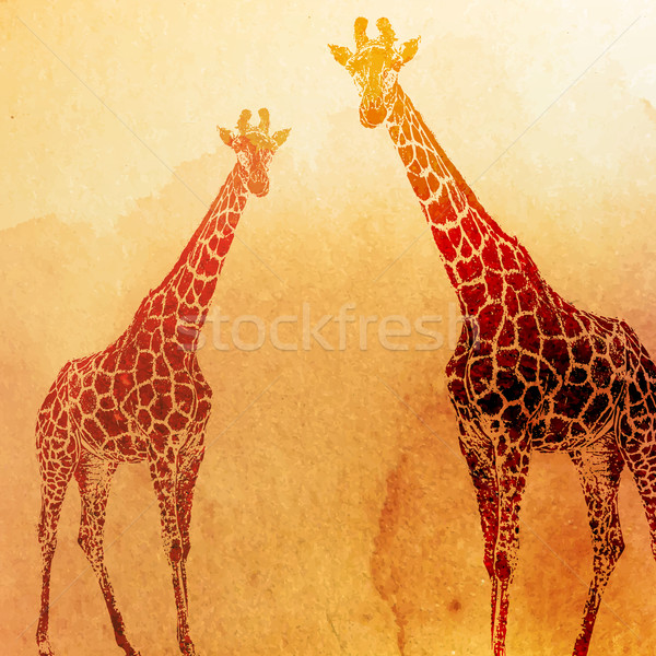vector vintage illustration of  watercolor giraffes on the old p Stock photo © maximmmmum