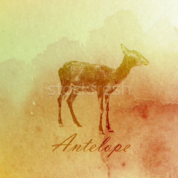 vector vintage illustration of a watercolor antelope on the old  paper texture Stock photo © maximmmmum