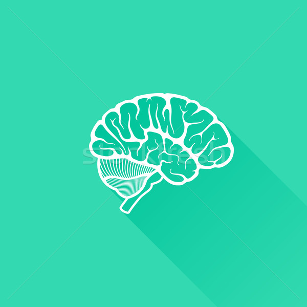 vintage vector illustration of human brain with long shadow  Stock photo © maximmmmum