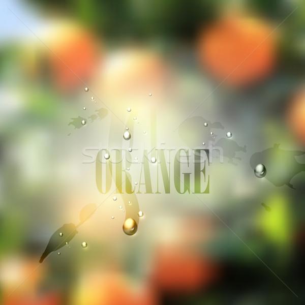 свежие расплывчатый продовольствие апельсинов капли воды Сток-фото © maximmmmum