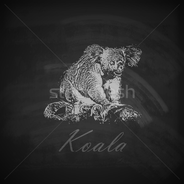 vector illustration of a chalk koala bear on the blackboard texture Stock photo © maximmmmum