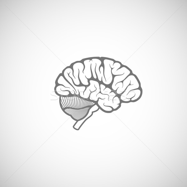 vector illustration of human brain  Stock photo © maximmmmum