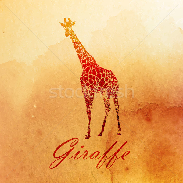 vector vintage illustration of a watercolor giraffe on the old paper texture Stock photo © maximmmmum