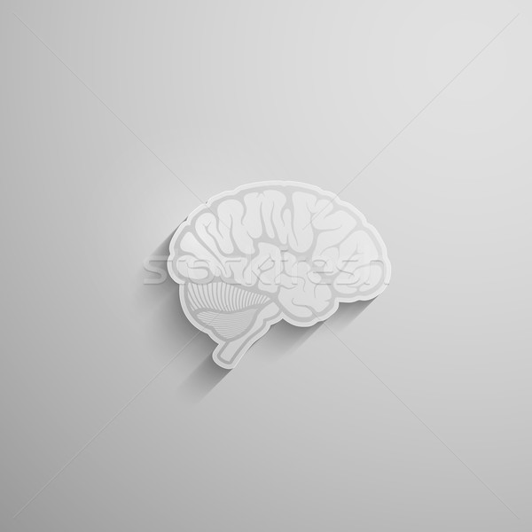 vector illustration of a paper 3d human brain with long shadow Stock photo © maximmmmum