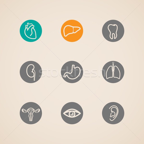 vector human organ icons set  Stock photo © maximmmmum