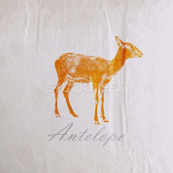 vector vintage illustration of an antelope on the old wrinkled paper texture Stock photo © maximmmmum
