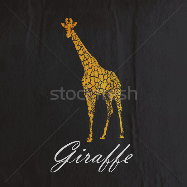 vector vintage illustration of an orange giraffe on the old blac Stock photo © maximmmmum