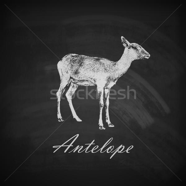 vector illustration of a chalk antelope on the blackboard texture Stock photo © maximmmmum