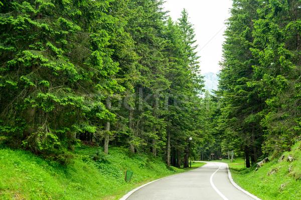 Wolna drogowego piękna lasu parku Czarnogóra Zdjęcia stock © maxpro