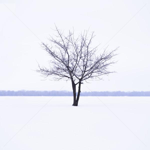Kış manzara yalnız ağaç buğu zaman Stok fotoğraf © maxpro