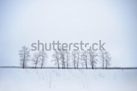 Winter landschap eenzaam bomen mist tijd Stockfoto © maxpro