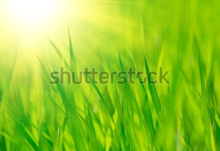 Fresh spring green grass and bright warm sun Stock photo © maxpro
