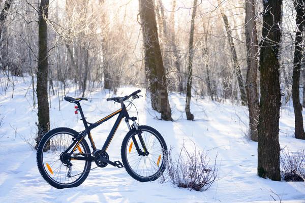 Mountain bike trilha belo inverno floresta sol Foto stock © maxpro