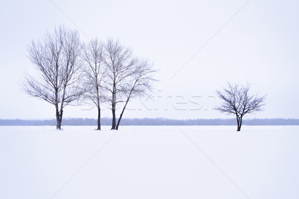 Winter landscape with lonely trees in mist time Stock photo © maxpro