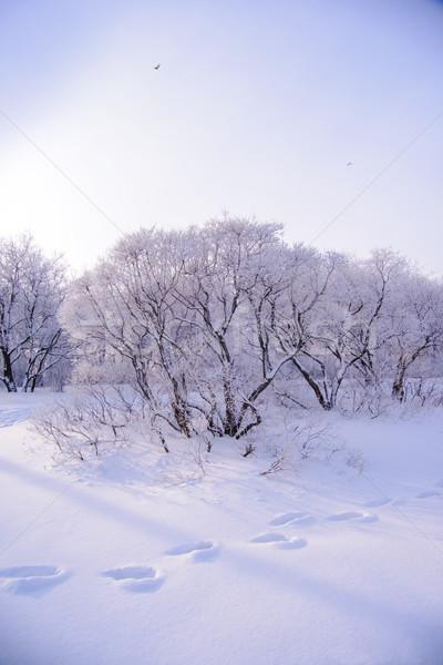 Inverno floresta neve árvore paisagem pássaro Foto stock © maxpro