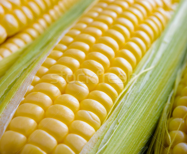Fresh Sweet Ripe Corn Cobs with Green Leaves Stock photo © maxpro