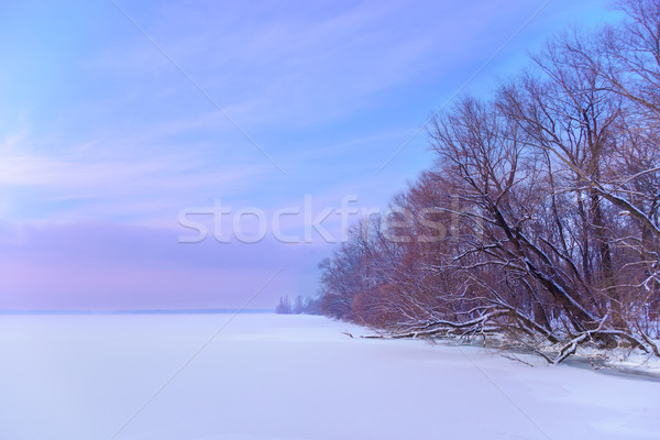 The frozen winter river in wood under snow Stock photo © maxpro